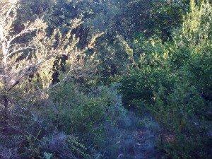 Visite du terrain suite dans terrain photo00581-300x225