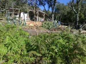Jardin d'hiver dans jardin velieux-004-300x225